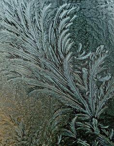 Icy Flourish | Flickr - Photo Sharing!