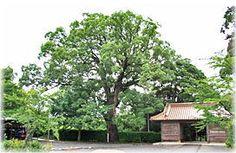 【中国観音霊場】第ニ十二番:多陀寺