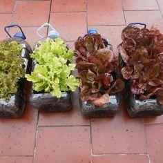 riciclare bottiglie di plastica Indoor Plants, Sprouts, Vegetables, Gardening, Google, Decor, Mesas, Classroom, Repurpose