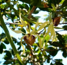 Queen Elizabeth II Botanic Park -- Orchids at the Park