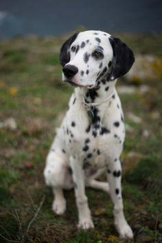 handsomedogs / Taro | Aritz González Saiz