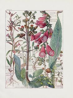 Botanical Gifts on Zazzle Vintage Botanical Foxglove Wildflower Flowers Card - flowers floral flower design unique style Botanical Drawings, Botanical Illustration, Botanical Prints, Illustration Art, Monkey Orchid, British Wild Flowers, Decoupage, Garden Of Earthly Delights, Unique Style