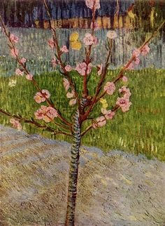Almond Tree in Blossom, 1888 by Vincent van Gogh. Post-Impressionism. landscape. Van Gogh Museum, Amsterdam, Netherlands