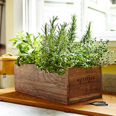 Herb garden in a wooden crate | #Horticool #ApartmentGardening #Gardening