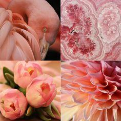 ROSA die sanfte Farbe vom Rosenquarz Colours, Board, Pink, Astrology, Glamour, Celtic Mythology, Forgive, Pink Quartz, Gemstone
