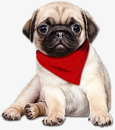 Pug Puppies New Dog Gifts Accessories Cute Pug Puppies, Puppies And Kitties, Cute Dogs, Pug Art, Cartoons Love, Cute Animal Drawings, Art Graphique, Dog Gifts, Clipart