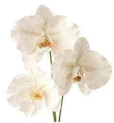 A Compendium of Sugar Flower Tutorials - Cake Geek Magazine Fondant Flower Tutorial, Fondant Figures Tutorial, Cake Topper Tutorial, Rose Tutorial, Fondant Rose, Fondant Flowers, Sugar Flowers, Fondant Baby, Clay Flowers