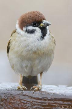 しずかすぎる公園もつまらないもんだねー。 #スズメ #Sparrows #鳥 #Birds #東京 #写真好きな人と繋がりたい #雨止んだ