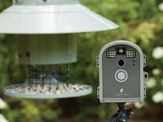Want to get better close-up nature shots or videos of your backyard birds? The BirdCam Pro is a weatherproof, motion-activated digital camera that is designed to monitor activity on your bird feeder and comes with flash and time-lapse features. Hummingbird Pictures, Hummingbird Flowers, Make A Bird Feeder, Bird Feeders, Flowers That Attract Hummingbirds, How To Make Butterfly, Fuchsia Flower, Backyard Birds, Garden Gifts