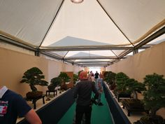 Bonsai, Outdoor Gear, Tent, Store, Bonsai Trees, Tents, String Garden