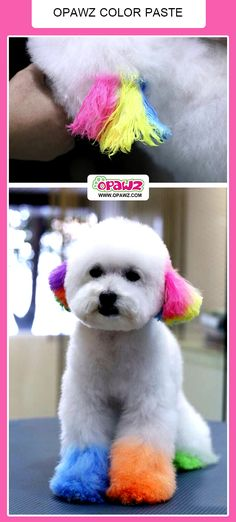 Temporary Color Paste for Dogs - Dog Grooming Products for dog coloring and Temporary  Hair Color For Pet