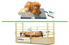 UmaTECH Scales, India's Leading Veterinary and Animal Weighing Scales Manufacturers and Suppliers @ Tiruppur in Tamil Nadu