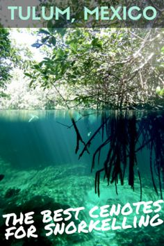 Not only are cenotes geographically and culturally special, they're also stunning places nature lovers will love to explore. Choose the right ones near Tulum! Visit my blog for more info.