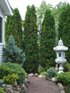 Conifer garden at   Rich's Foxwillow Pines Nursery
