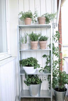 se – - All About Balcony Small Balcony Decor, Balcony Plants, House Plants Decor, Balcony Garden, Indoor Plants, Balcony Decoration, Garden Plants, Ikea Outdoor, Garden Shelves
