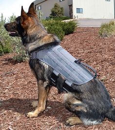GHOST Series Renegade Dog Harness | Grey SWAT Dog Hanress | Gray Police Dog Harness | Gray Dog Harness | Ray Allen Manufacturing