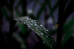 Fotografía rainy summer day por Dejan Janev en 500px