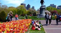 memorial day 2017 boston