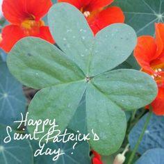 Happy Saint Patrick's Day by Eamon Michel 2015