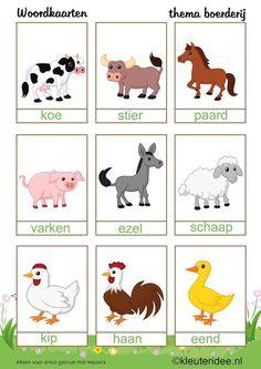 woordkaart dieren
