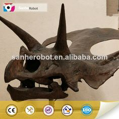 Museum exhibition equipment dinosaur skull  1.Museum standard  2.With 3-5cm thickness  3.High quality&reasonable price