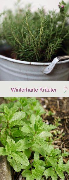Winterharte Kräuter für Balkon und Garten