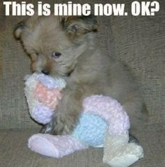 Cute pictures of animals with captions. Cute pictures of animals with captions. Cute pictures of animals with funny captions. Funny Animals With Captions, Cute Animal Memes, Funny Animal Quotes, Animal Jokes, Funny Animal Pictures, Cute Funny Animals, Funny Cute, Funny Dogs, Dog Pictures