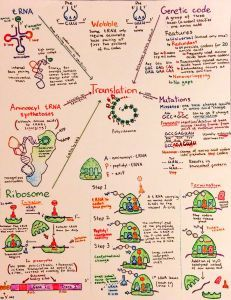 Introductory Biochemistry Flowcharts - Introductory Biochemistry Flowcharts – Love, Life and Position-time Graphs - Study Biology, Biology Lessons, Teaching Biology, Science Biology, Science Education, Life Science, Biology Memes, Biology Review, Biology Projects
