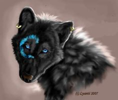 Black Wolf with Blue Eyes | light brown, brown, and black female wolf with lush…