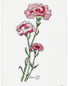 Features – Ink, ink and pen, ink and watercolor, ink and. Carnation Drawing, Carnation Tattoo, Watercolor And Ink, Watercolor Flowers, Watercolor Paintings, Tattoo Fleur, Pattern Texture, Pink Carnations, Birth Flowers