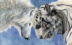 Wolf Quotes | Emotional Sad White Wolf With A Tiger D For Wallpaper with 1280x800 ...