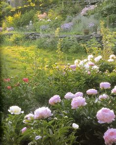 tasha tudor | Tasha Tudor's Garden by Tovah Martin, photographed by Robert Brown. These are my 3 very favorite varieties of peonies all in one photo. The bright pink ones are Coral Charm, white ones are Prairie Moon, and the soft pink ones are named after my namesake, Sarah Barnhart!