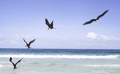 Freedom in the vastness.