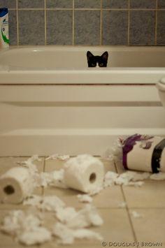 """It wasn't me!""  cat & toilet paper shreds © Douglas J Brown"