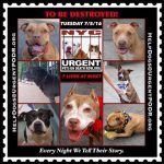 TO BE DESTROYED 7/05/16