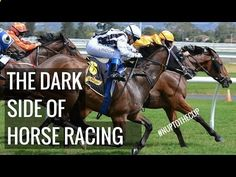 HERES WHY HORSE RACING IS BAD - YouTube