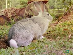 coelho fofo, animais, natureza