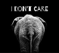 I don't care elephant