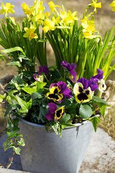 Fånga in påskens färger med blommor!