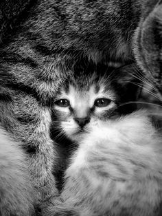 2 of my favorite things, black and white photography and kitties!