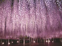 Japan has tons of beautiful flowers! 12 Flower Spots in Eastern Japan   tsunagu Japan