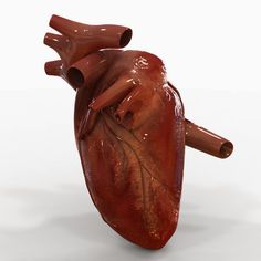 Researchers have discovered that endothelial cells in the coronary arteries work as cardiac stem cells. The findings could have major impli...
