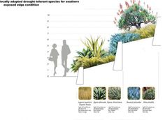 Perimeter Mix - Design - Santa Monica Civic Center Parks ... indigenous plants of So. Cal.