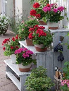 Jardineras verticales de palets inundadas de color we have some concrete steps which I would love to clear this year an fill with pots of geraniums Beautiful Gardens, Beautiful Flowers, Cinder Block Garden, Cinder Blocks, Pot Jardin, Red Geraniums, Garden Projects, Garden Pots, Garden Trellis