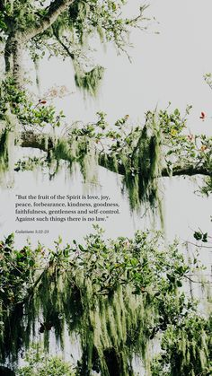 But the fruit of the Spirit is love, joy, peace, longsuffering, gentleness, goodness, faith, 23 Meekness, temperance: against such there is no law. Galatians 5:22-23 Bible Encouragement, Bible Verses Quotes, Bible Scriptures, Christian Wallpaper, Godly Woman, Super Quotes, God Is Good, Spiritual Quotes, Christian Quotes