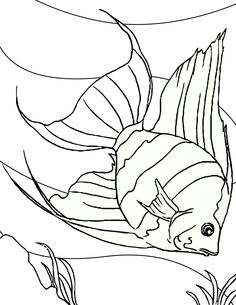 fish color page catfish Coloring Pinterest Catfish and Fish