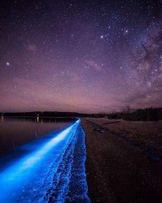 Noctiluca scintillans, aka sea sparkles, bring some magic to the Tasmanian coastline.