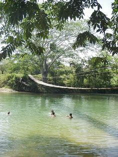 San Ignacio, Belize.  Jungle hammock bridge.