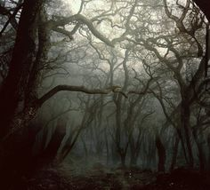 Themes: old forest, haunted woods, creepy photography, melancholic trees, haunting forest Arte Do Sistema Solar, Carpathian Forest, Outdoor Fotografie, Dark Wood, Belle Photo, Mists, Woodland, Nature Photography, Creepy Photography
