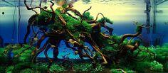 Bubbles Aquarium - Aquascapes (Tank Setups / Projects) http://bubblesaquarium.com/Aquascape/TankSetups_Projects/TankSetups_L_Tank01.htm